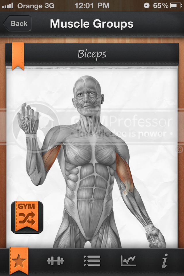 GP Shuffle workout app anatomy image of Biceps muscle group
