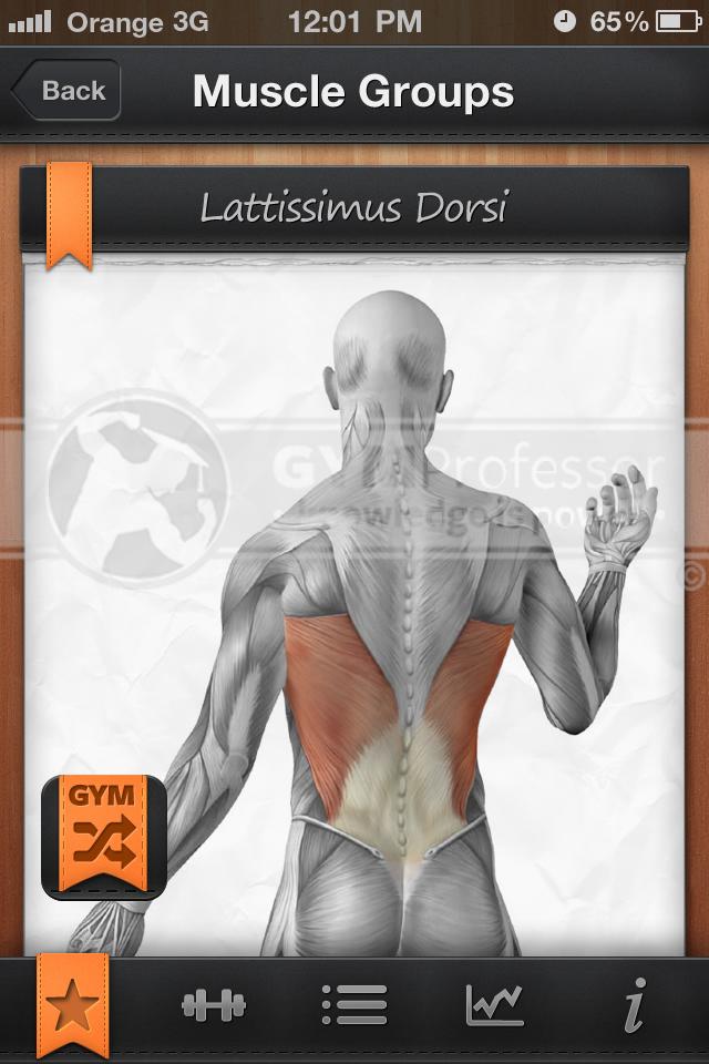 Exercise Diagrams Lats