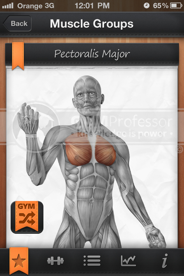 Pectoralis Major muscle group (from GP Shuffle workout app)